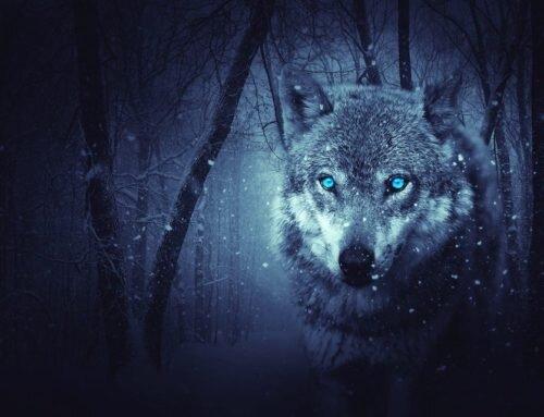 Historia o dwóch wilkach